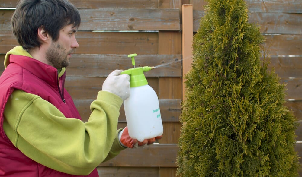 Does Eco-Friendly Pest Control Work?