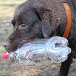 How To Go Zero Waste With A Dog