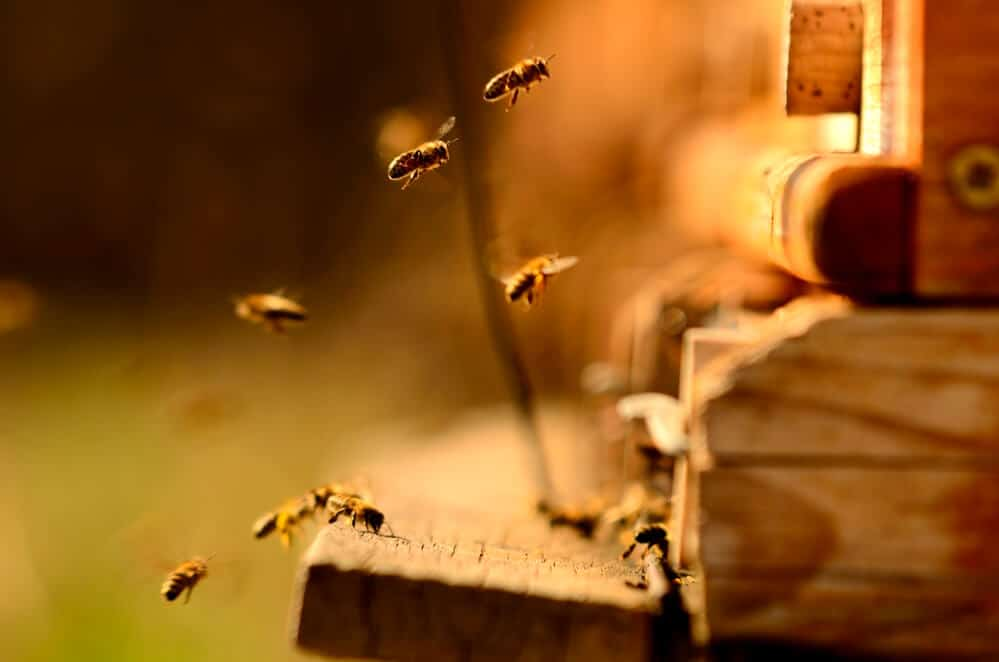 is Is Honey Sustainable?