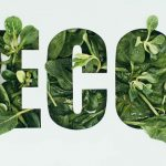 Is Eco Friendly The Same As Biodegradable?