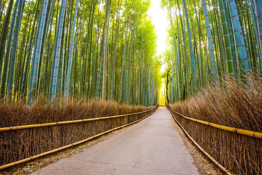 Is Bamboo Compostable or Biodegradable?